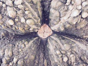 Crottes 👶🏻